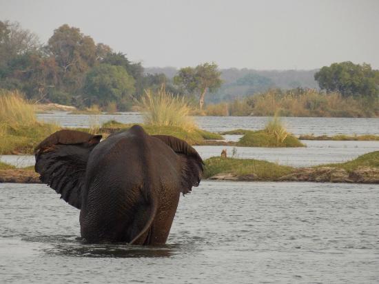 The Kingdom at Victoria Falls: Balade sur le Zambeze