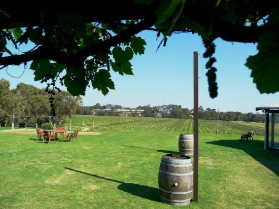 Riverbank Winery: back yard of the restaurant