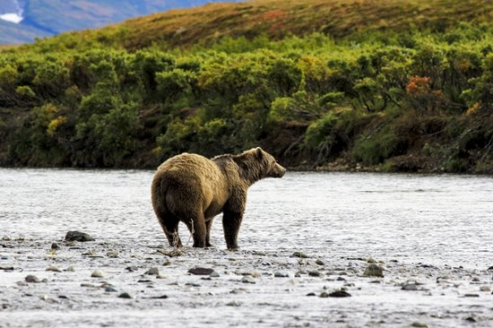 Homer, AK:                   Katmai in the Fall