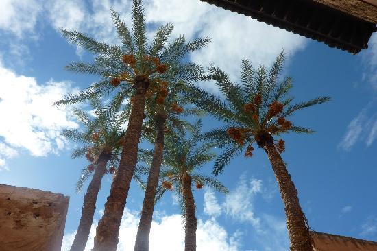 Riad Charme d'Orient: palmiers des temples saadiens