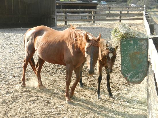 Red Horse Mountain Ranch: Bailey and her baby Kalua