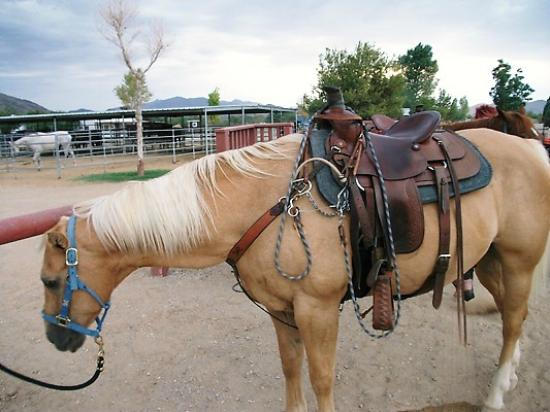 Sandy Valley Ranch : Beautiful horses