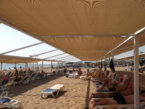 Alba Royal Hotel: Beach is well shaded and you can lay in sun if you wish