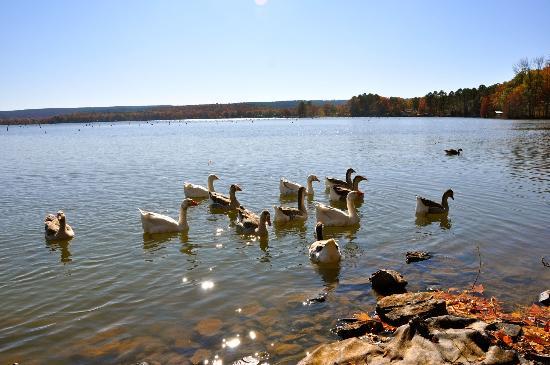 Harris Brake Lake Resort: The lake