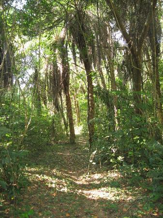 Macaw Bank Jungle Lodge: Walk to the car