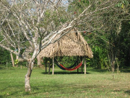 Macaw Bank Jungle Lodge: Grounds