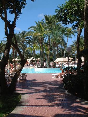 Aparthotel Riu Flamingo : Pool View from hotel