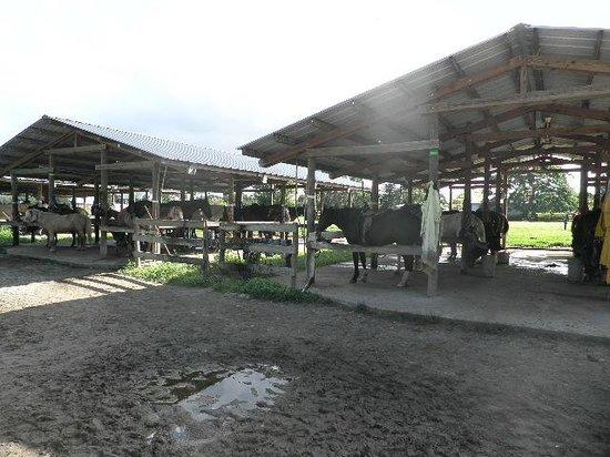 Bar-B-Ranch: stables