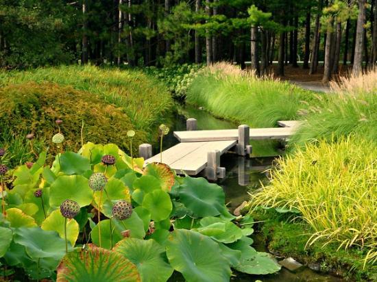Japan Garden Flowers: Japanese Gardens Lotus Flowers