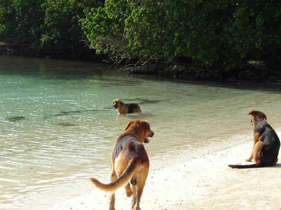 Half Moon Beach: spelende honden