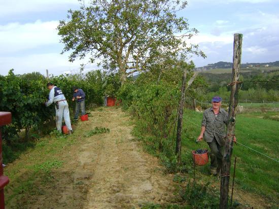 Sant'Anna Vacanze: Bei der Weinlese - Umberto hier im Vordergrund (rechts) zu sehen