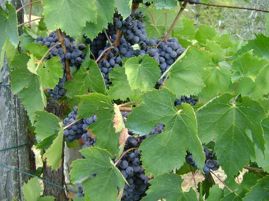 Sant'Anna Vacanze: leckerer Wein!