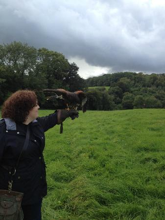 West of England Falconry: me and Charlie (?)