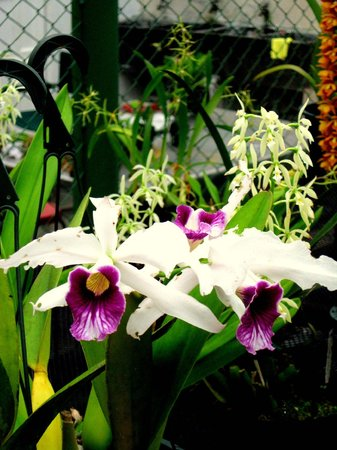 Cerro Punta, Panama: an enormous variety of orchids