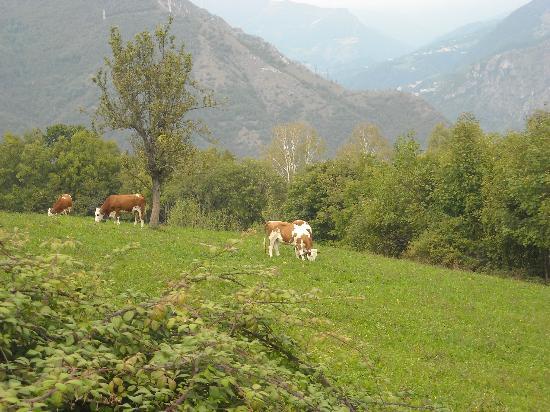 La Casa di Parpaet: mucche al pascolo a parpaet