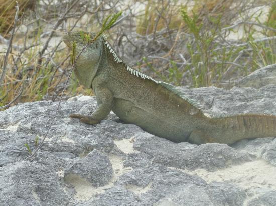 Island Vibes Tours: Iguana Island