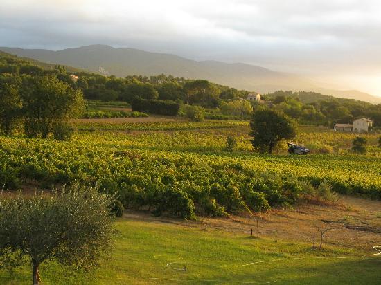 La Bastide st Victor : Uitzicht over de wijngaard