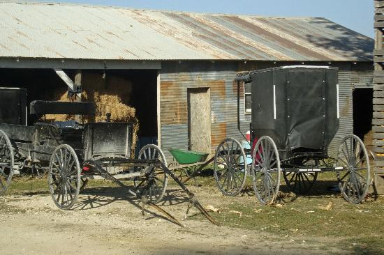 Bluffscape Amish Tours: Amish buggy and wagon