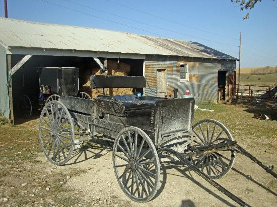 Bluffscape Amish Tours : Amish Wagon