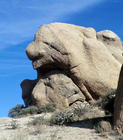 "McDowell Sonoran Preserve: Looks like ""Sneezy"""