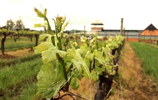 Rochford Wines Yarra Valley: Yarra Valley Pinot Noir