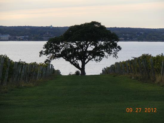 Ventosa Vineyard: View from area Where outdoor  wedding would be