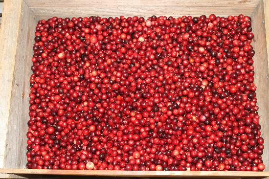 Cranberry Bog Tours: Freshly Sorted Cranberries