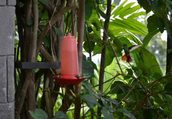 The Springs Resort and Spa: hummingbird feeders