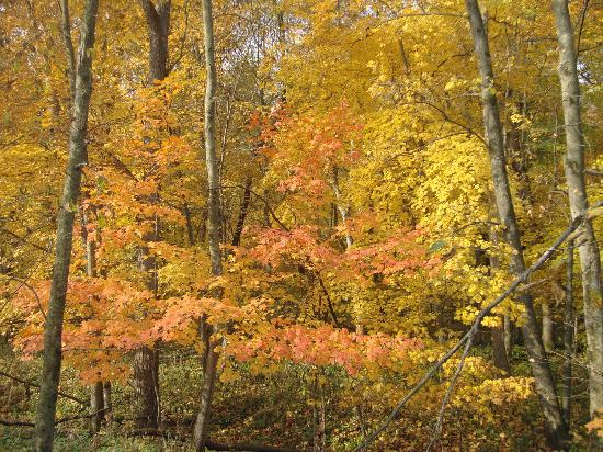 Root River: Stunning fall colors along the trail