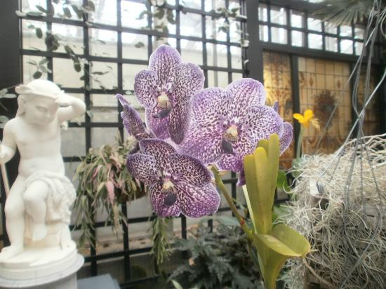 Grand Rapids, MI: Amazing Flowering Plants From All Pver The World