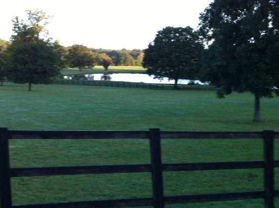 Coworth Park - Dorchester Collection: Pond on property in the dawn light
