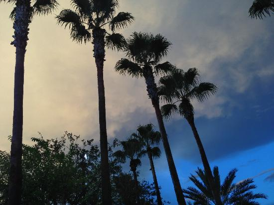 Marriott's Grande Vista: Love the palm trees every where!