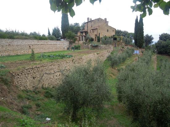 Agriturismo Podere San Lorenzo: olive groves and main house