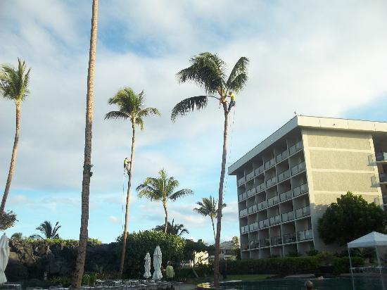 Waikoloa Beach Marriott Resort & Spa: palm tree maintenance