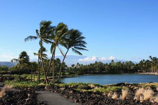 Waikoloa Beach Marriott Resort & Spa: a bay fishpond