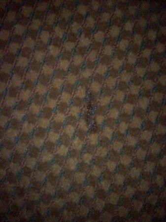 Super 8 Hartford WI:                   Burn marks on carpet