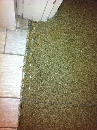 Temecula Creek Inn: Exposed carpet tacks