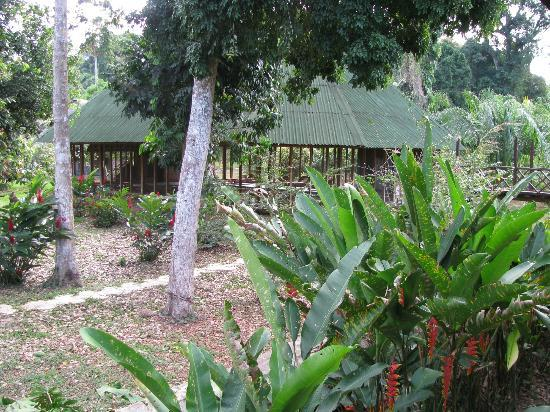 Ecoamazonia Lodge: Grounds