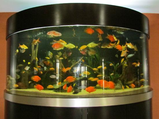 SpringHill Suites Waco Woodway: Aquarium in lobby