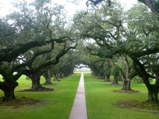 Cajun Pride Tours: Oak Alley 280 years old