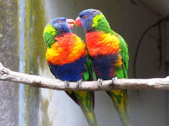 Pouakai Zoo