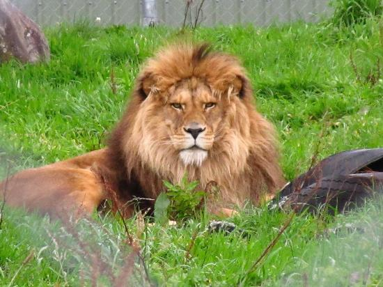 Pouakai Zoo: Very majestic