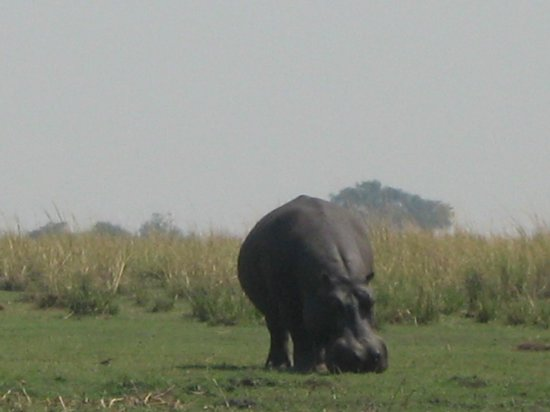 Chobe Day Trips