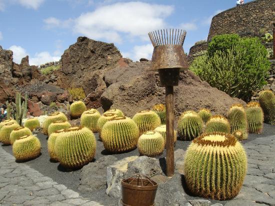 Gigantesco - Picture of Jardin de Cactus, Guatiza - TripAdvisor