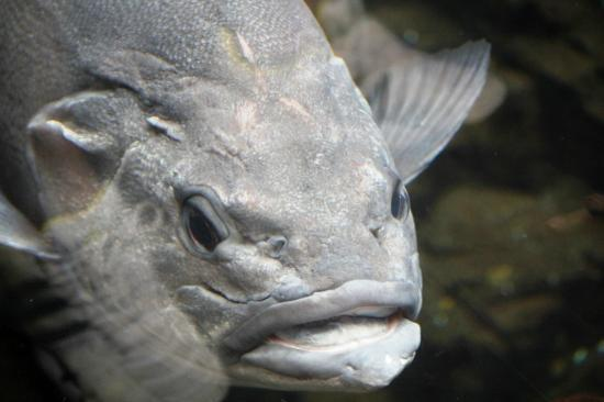 Lisbon Oceanarium: The ugliest fish in the Ocenario