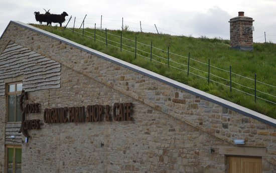 Cross Lanes Organic Farm: Say hello to Roofus, Ewegene and Baarny
