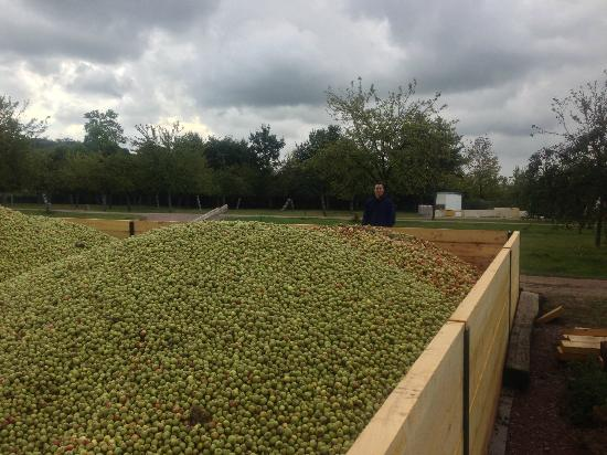 Domaine Dupont : Apples
