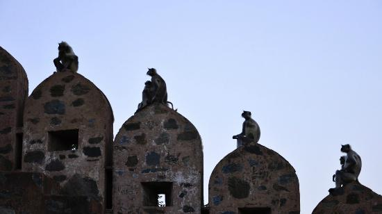 Club Mahindra Fort Kumbhalgarh: 4 wise men @ Kumbhalgarh fort