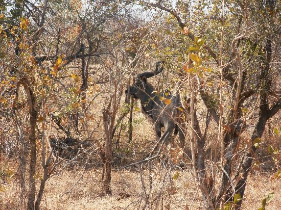 Zimbabve: Kudus at the Park