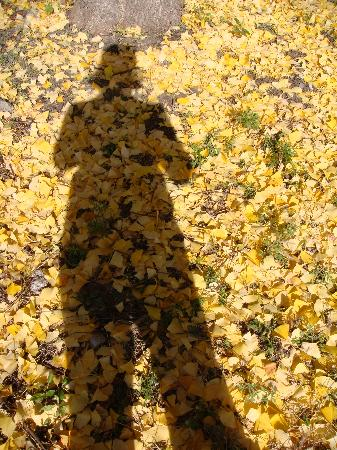 Four Seasons Hotel Vancouver : Yellow leaves